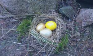 Hajauttaminen: ei kaikkia munia yhteen koriin. Kuvassa linnunpesä, jonka sisällä on värikkäitä ja kultaisia munia.