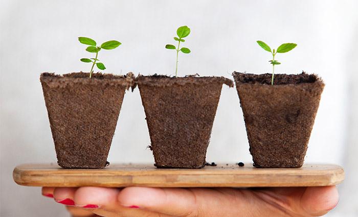 Yleiset kysymykset ja vastaukset osakesäästötilistä. Kuvassa ruukussa kasvavia kasveja.